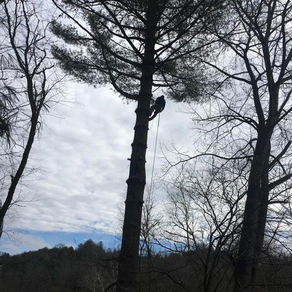 tree service boone nc
