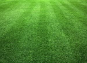 cut grass boone nc