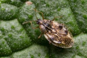 landscaping pests Boone NC
